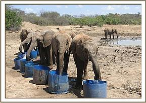 The orphans taking water at the mud bath