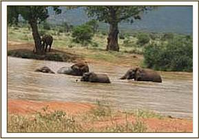 Wild eles having fun in the Irima waterhole