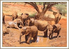 The orphans enjoy a mudbath
