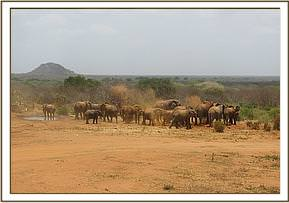 Ex orphans and wild elephants