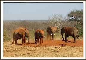 Madiba and Napasha with two wild elephants