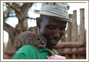 Rax the orphan tree hyrax with Adan