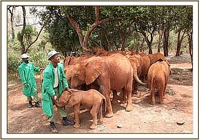 Orphans in the park with their keepers