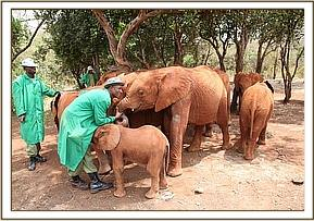 Orphans with their keepers