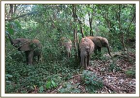 The orphans looking for green vegetation