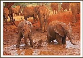 Taveta right and Rombo in the mudbath