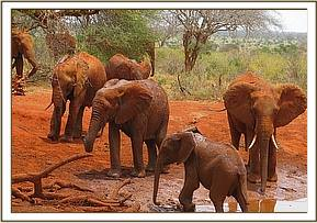 Kenia leaving the mudbath