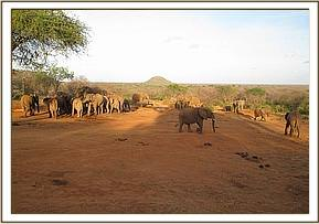 wild elephants & ex orphans at the stockade