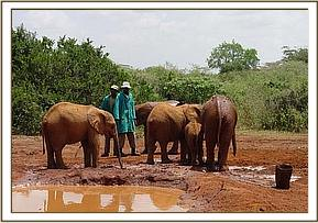 The orphans enjoying theri time at the mud wallow