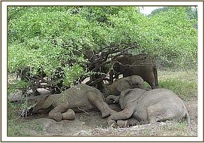 The orphans take a siesta in the shade