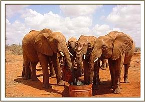 Liakipia, Nyiro and Edie share a water bucket