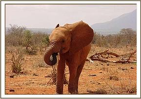 Burra bites his trunk in hunger
