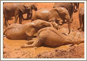 Orphans enjoying a mudbath
