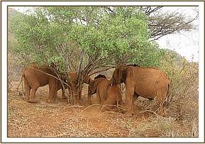 Orphans resting in the shade