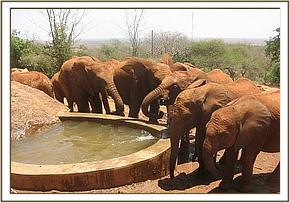 Orphans drinking water