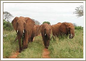 Laikipia leads the way to the waterhole