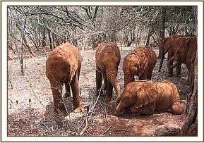 The nursery orphans relaxing in a clearing