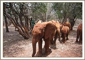 Challa leads the nursery group out to the bush