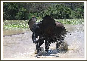 Kinna playing in the waterhole