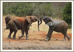 Ndomot plays with Buchuma at mud bath