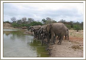 Orphans having a drink at the mud bath