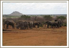 Wild elephants at the stockade