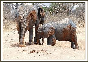 Narok and Lemoyian after mud bath