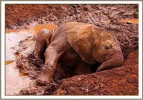 Enkesha loving mud bath