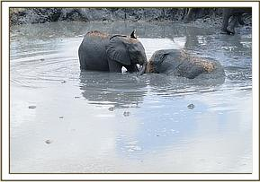 Lemoyian and Kithaka in the mud bath