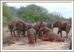 Orphans enjoying their mud bath