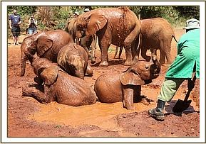 Barsilinga and Kithaka enjoying the mudbath