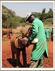 Lemoyian having milk
