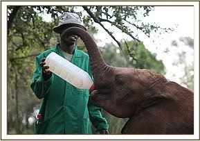 Kibo having milk