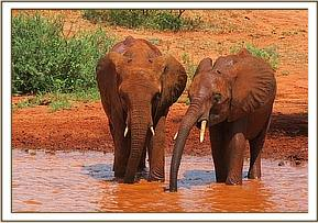 Tassia and Shimba at the mudbath