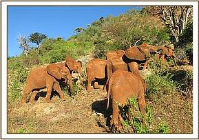 The orphans browsing on Masinga Hill