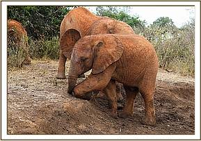Enkesha was promoted to the older herd