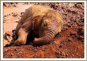 Enkesha fell asleep in the mud!