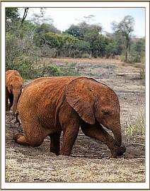 Enkesha playing in the damp soil