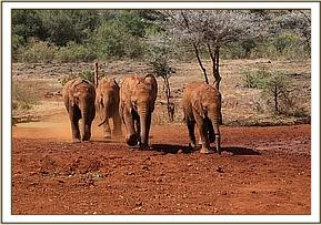 Tagwa, Godoma, Kuishi, Enkesha running for milk