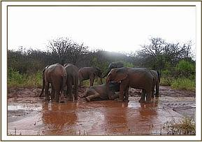 Orphans playing with rain water