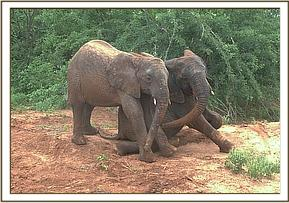 Chyulu & Lenana playing