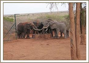 Wild elephatns at the stockade