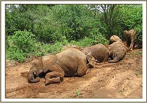 The orphans rolling in the mud