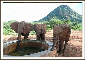 Galana, Sidai and Kamboyo having a drink