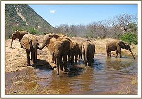 Orphans comes across a natural water hole