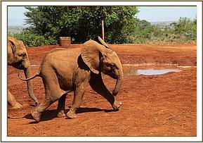 Ishanga racing for her milk