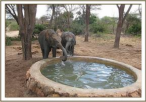 Chaimu and Sabachi taking water