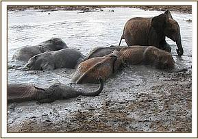 Orphans cooling off in the mudbath