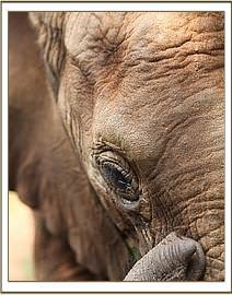 Kainuk rubbing her eye