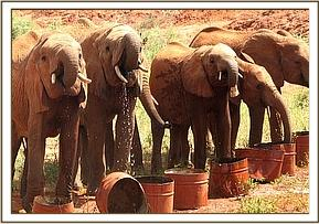 The orphans drinking